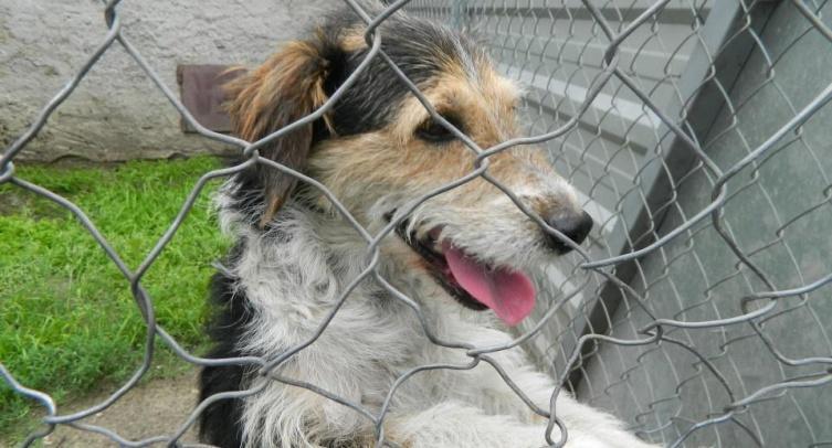 Odłowiony pies - fot. Archiwum Straży Miejskiej w Barcinie