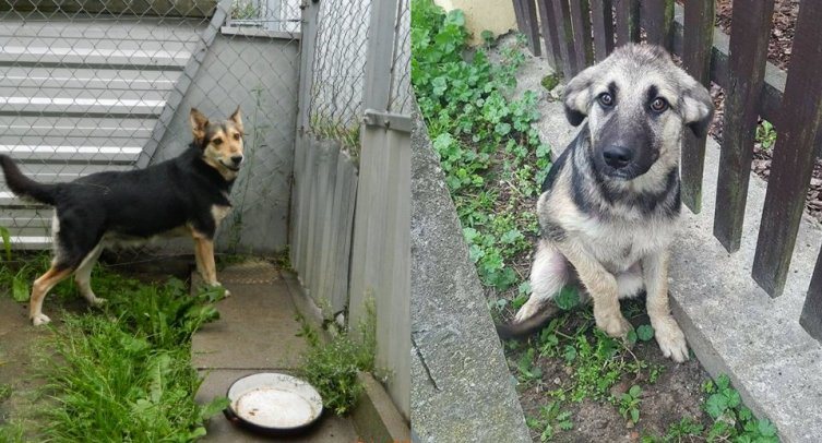 Psy odłowione w Pturku i Złotowie - fot. archiwum Straży Miejskiej w Barcinie