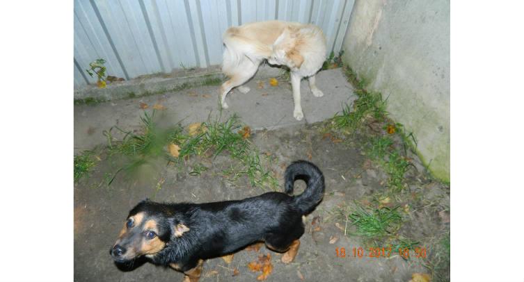 Psy odłowione w miejscowości Knieja - fot. Archiwum Straży Miejskiej w Barcinie
