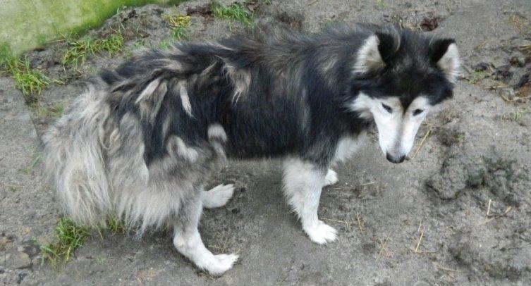 Pies odłowiony w Pturku - fot. Archiwum Straży Miejskiej w Barcinie