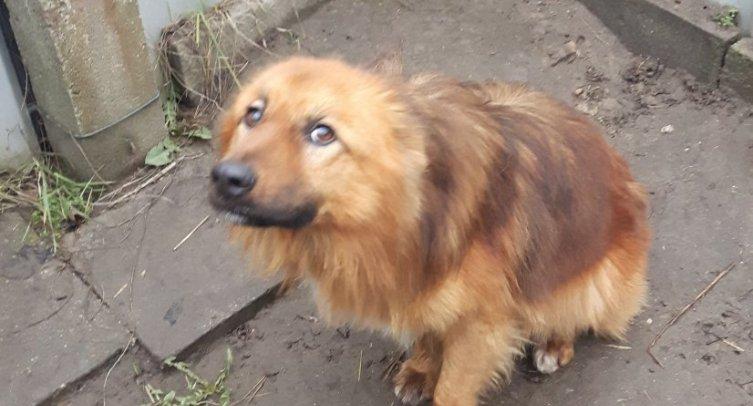 Pies odłowiony w Złotowie - fot. Archiwum Straży Miejskiej w Barcinie