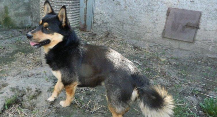Pies odłowiony w Mamliczu – fot. archiwum Straży Miejskiej w Barcinie