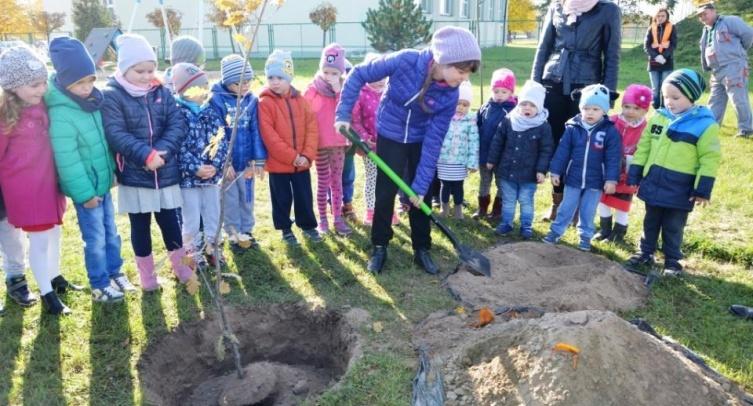Dąb przedszkolaków, dzieci i młodzieży szkolnej - fot. Grzegorz Smoliński